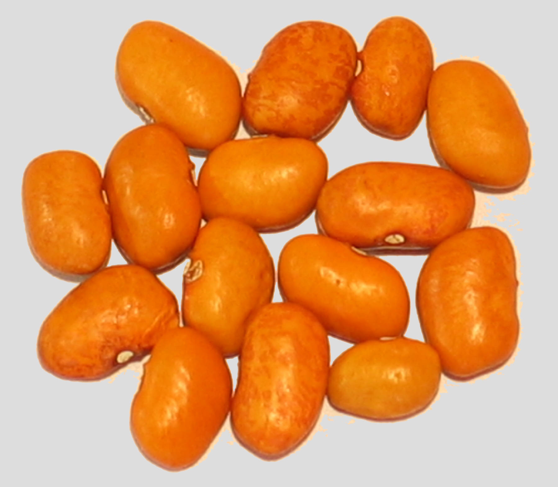 image of Bright Orange Paivte Tepary beans