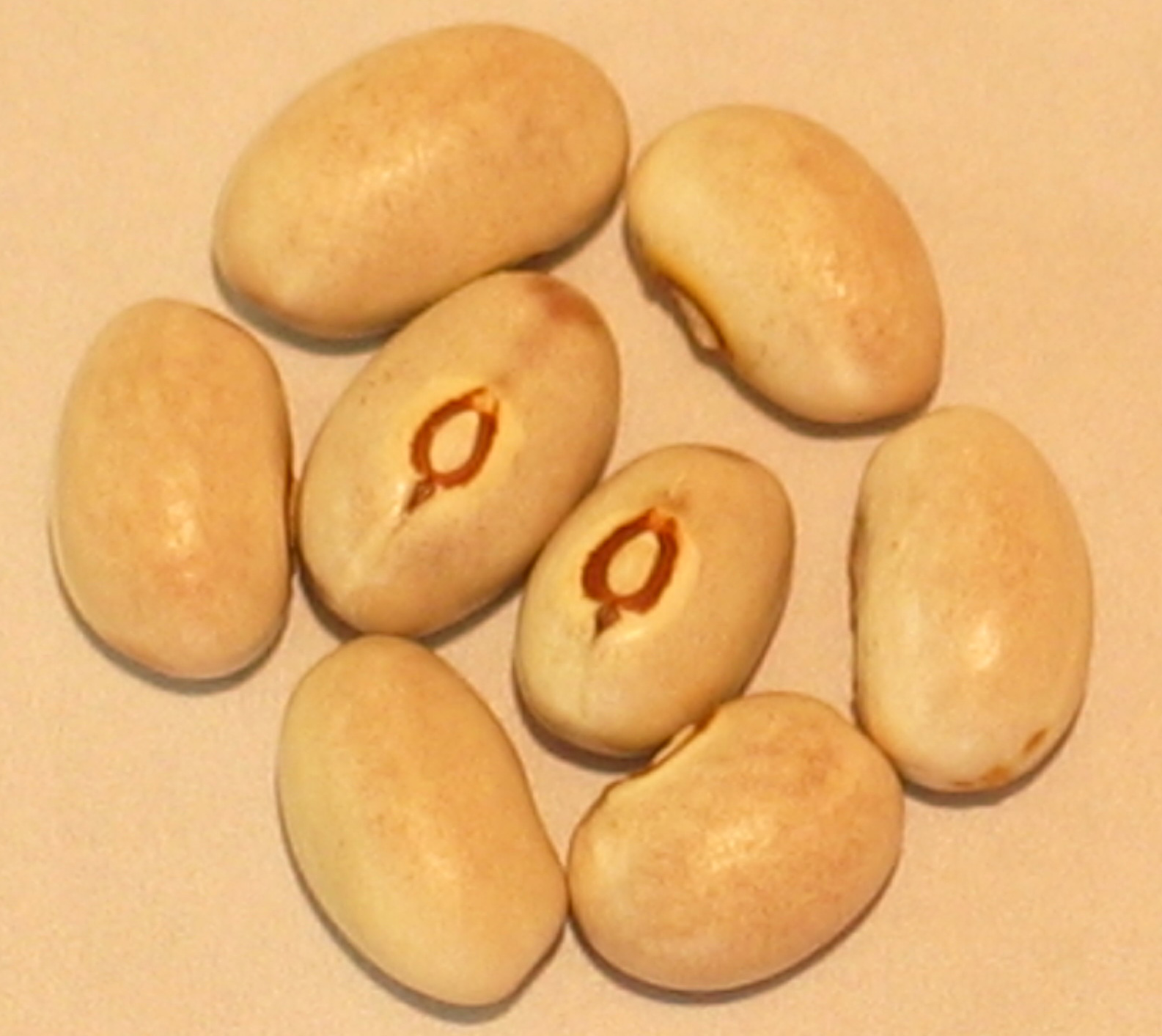 image of Buddha's Bellybutton beans