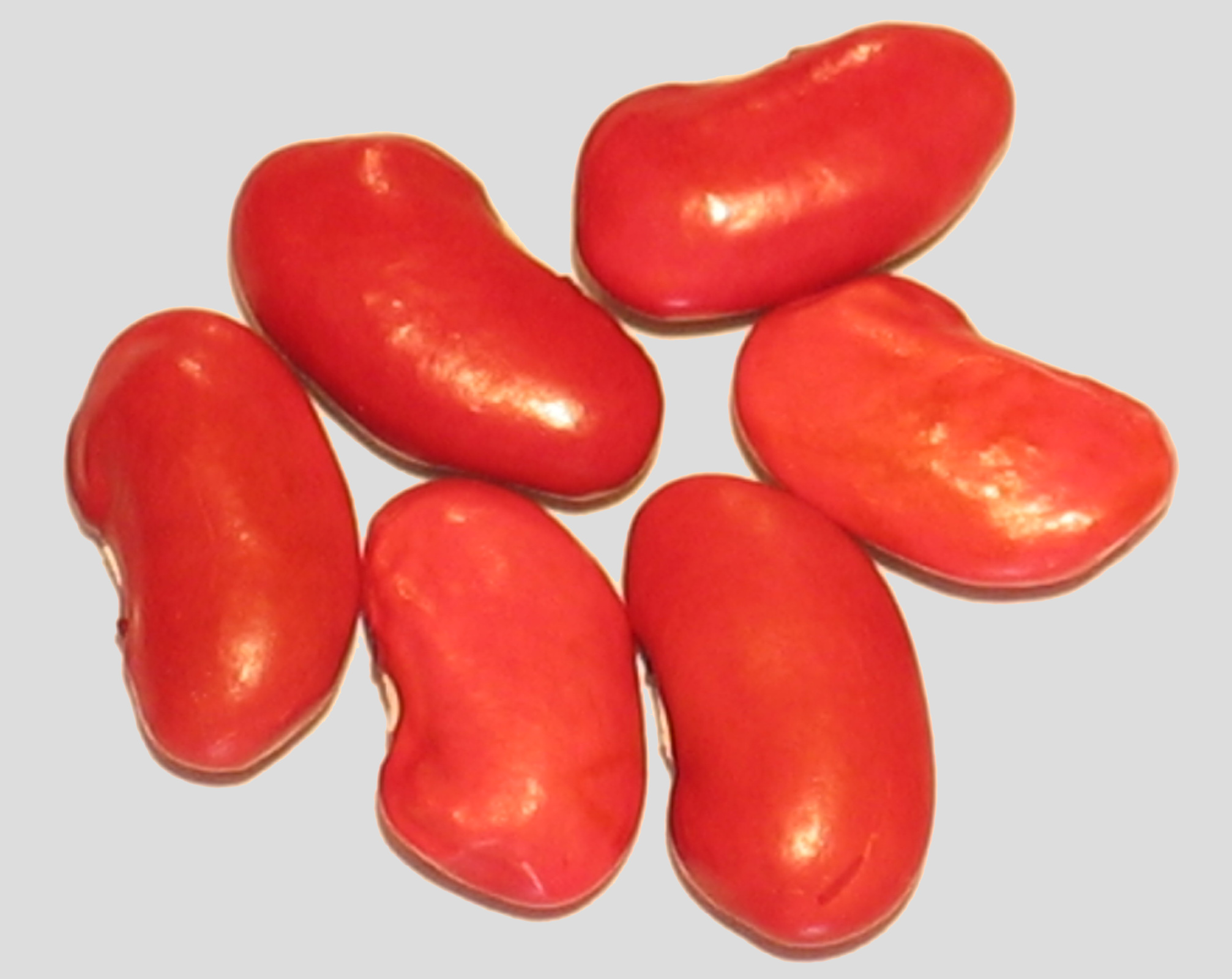 image of Burgundy Kidney beans