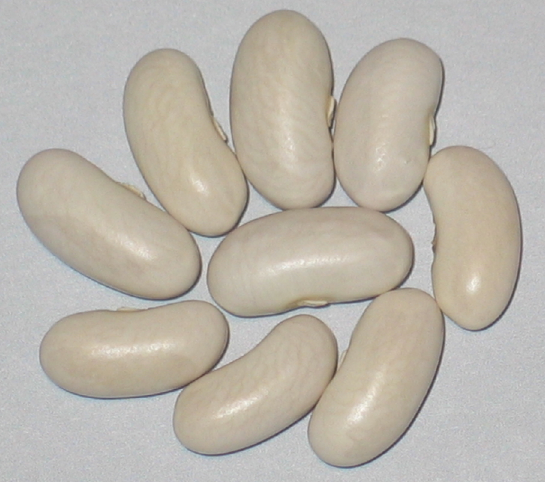 image of Cannellini beans