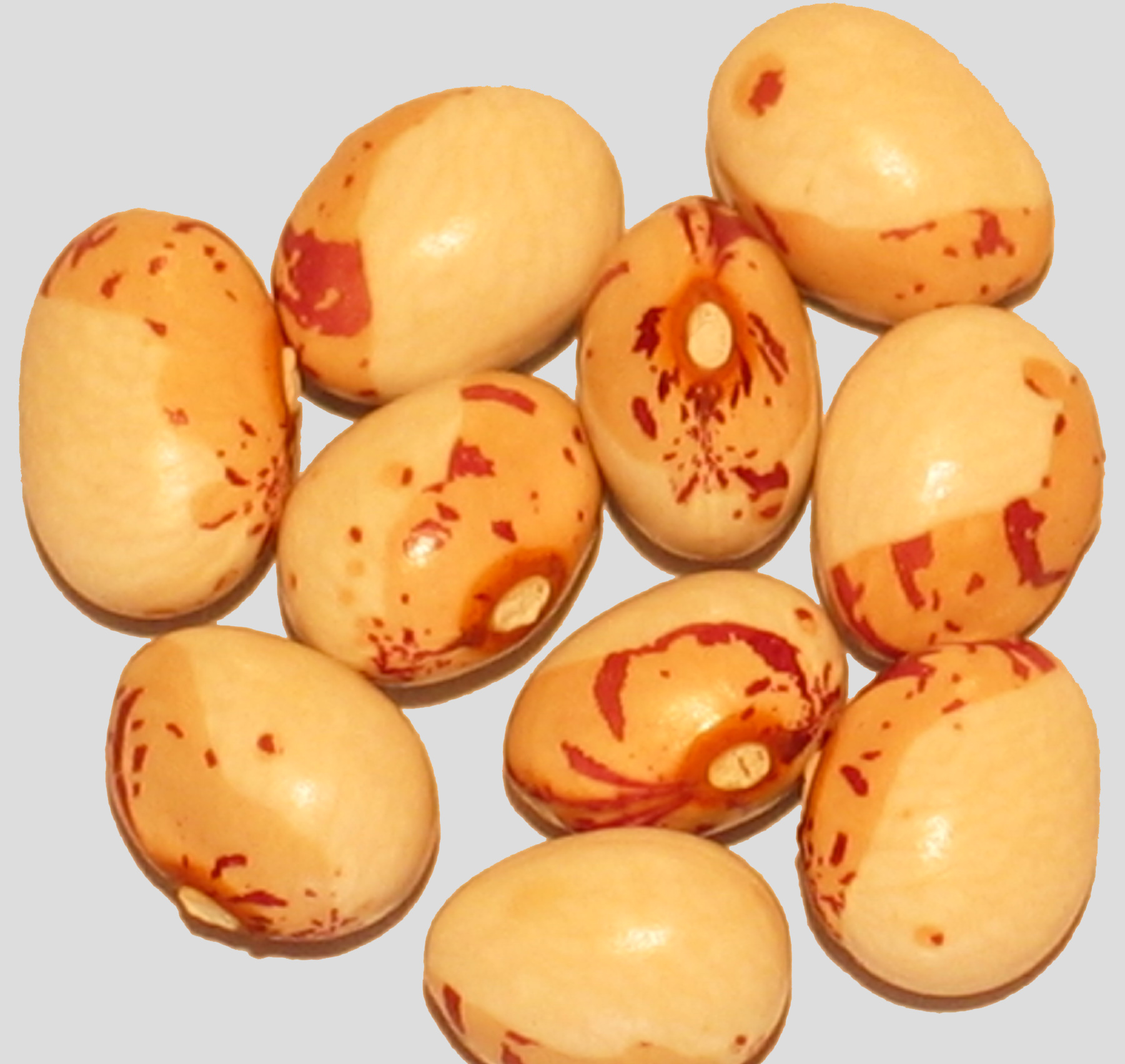 image of Cape Sugar 2 beans