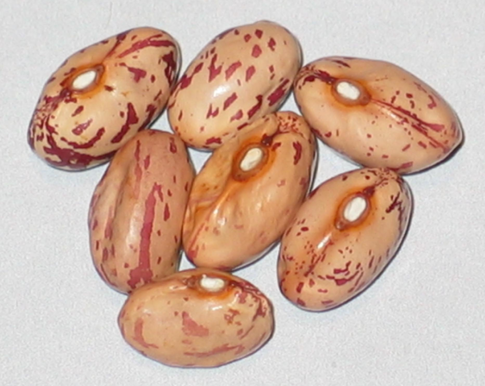 image of Cedar Creek beans
