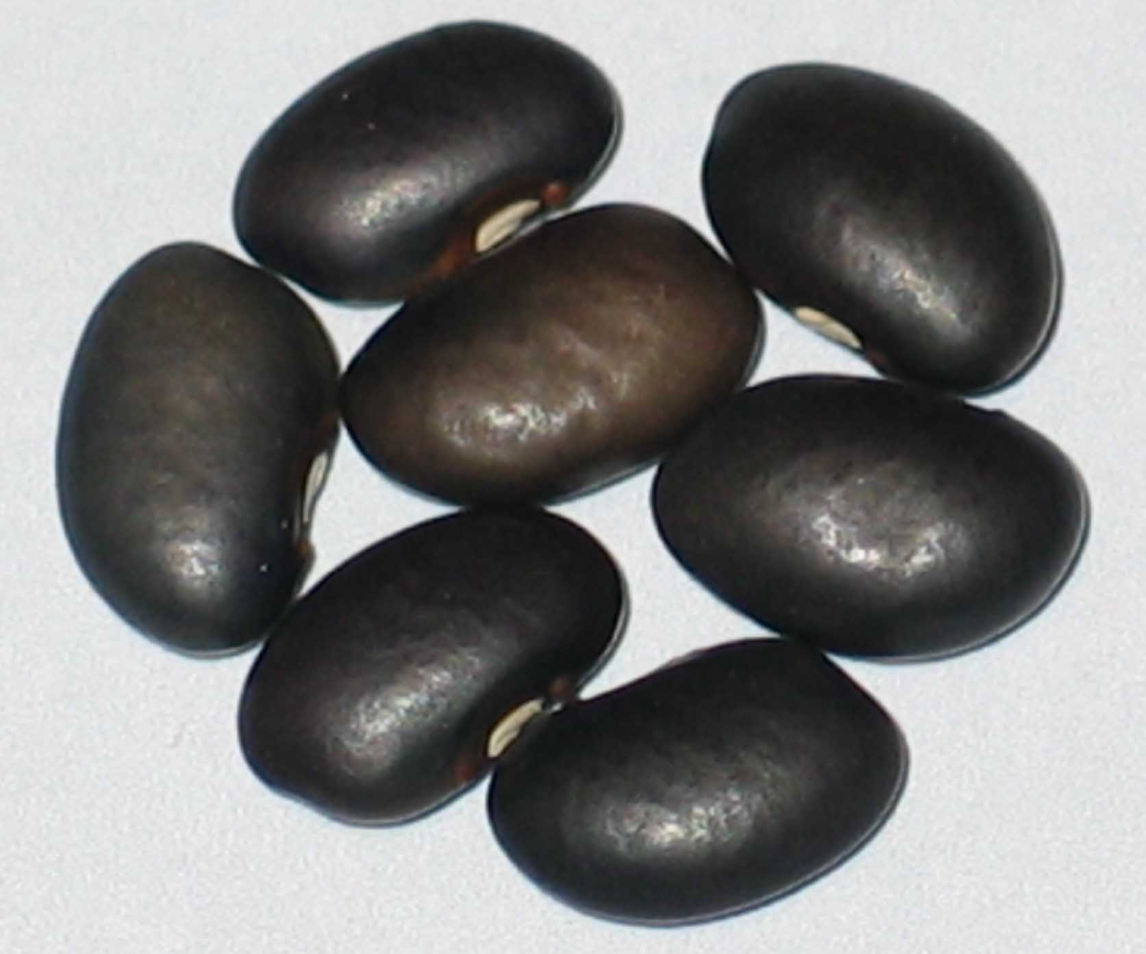 image of CIAT Bean G-4637 beans
