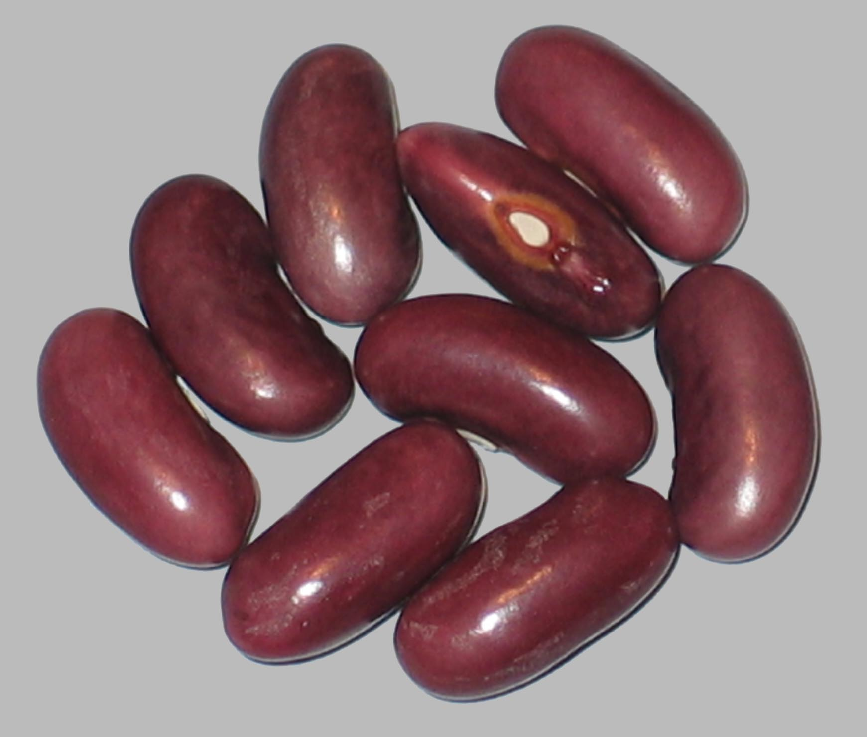 image of College Early beans