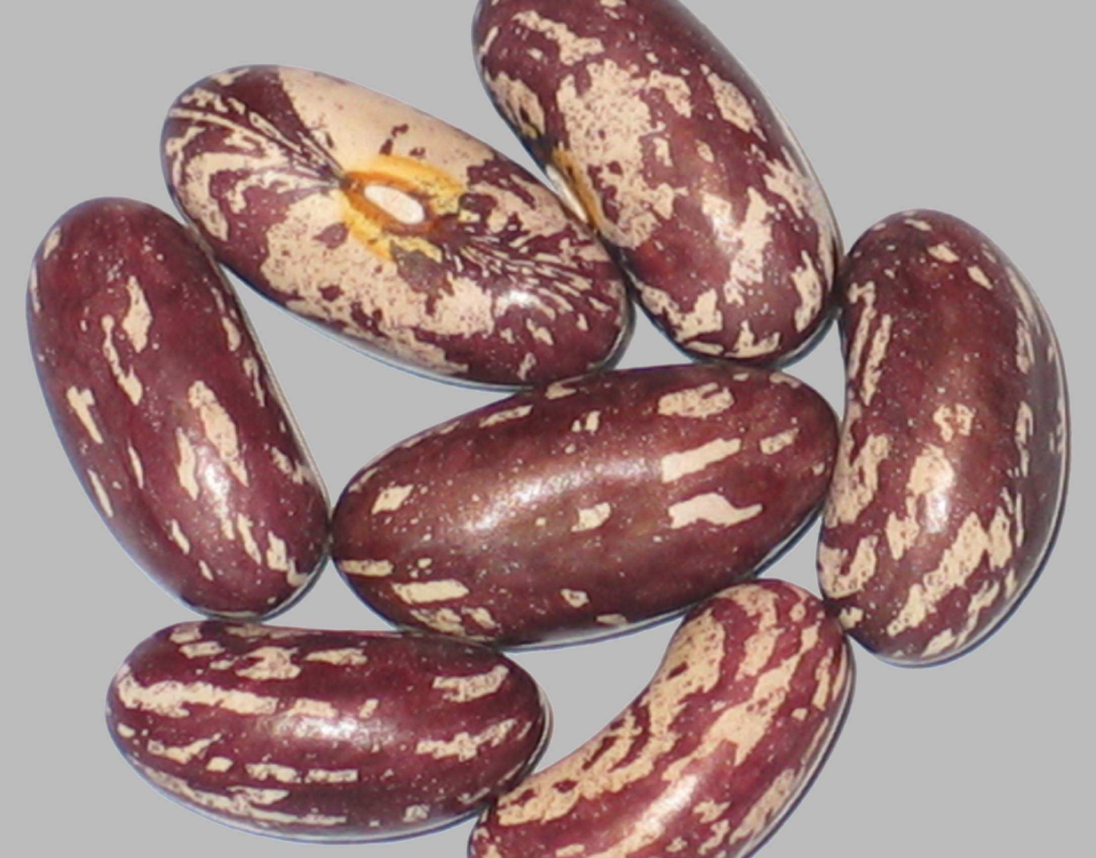 image of College Pride beans