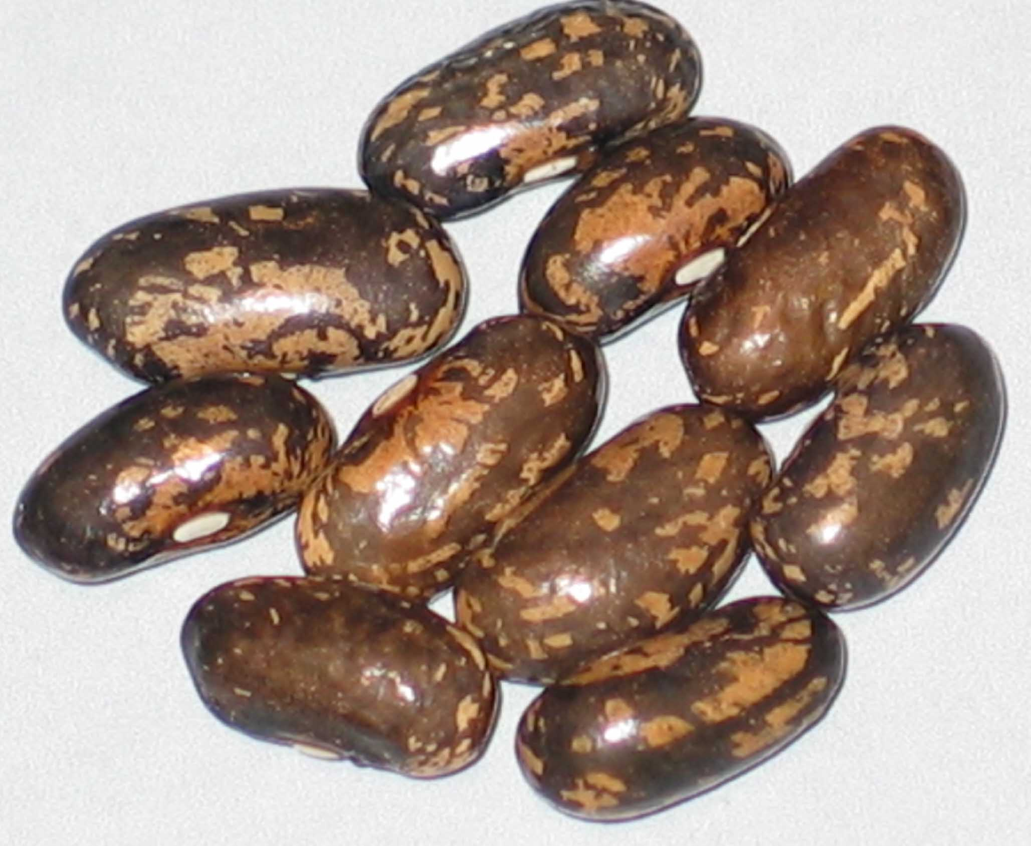 image of Corbett Refugee beans