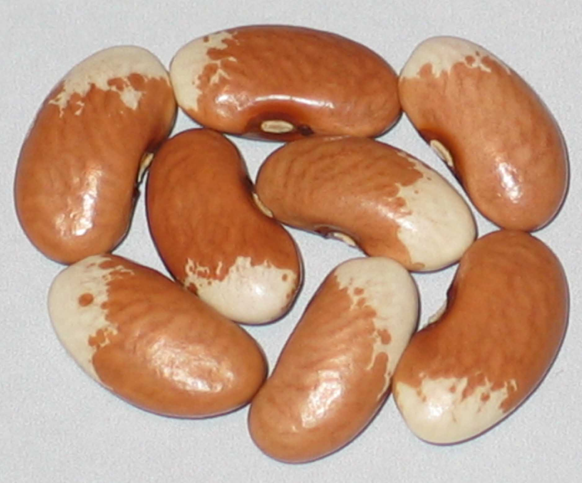 image of Cottontail beans