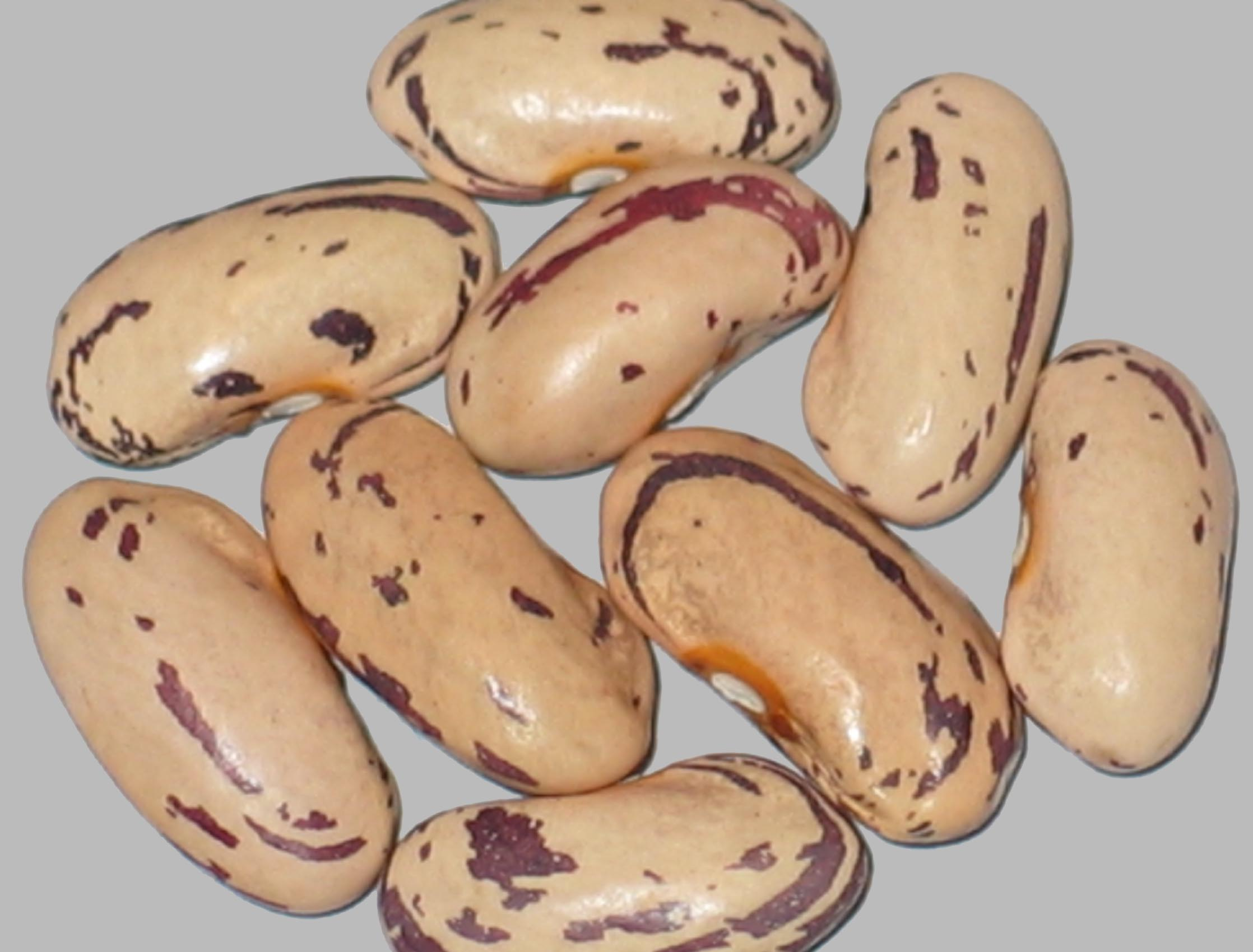 image of Duro Red Cranberry beans