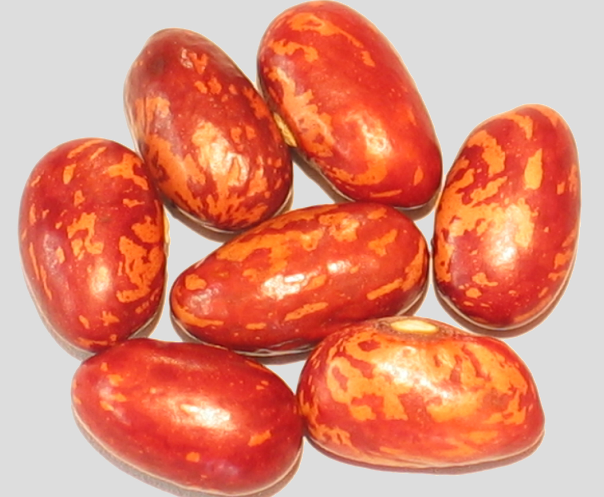 image of  Family beans