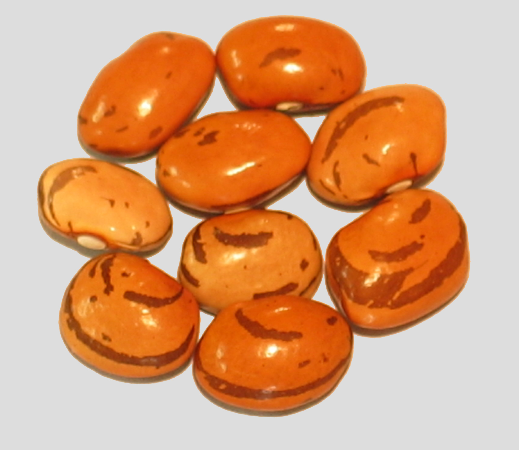 image of Fanomen beans
