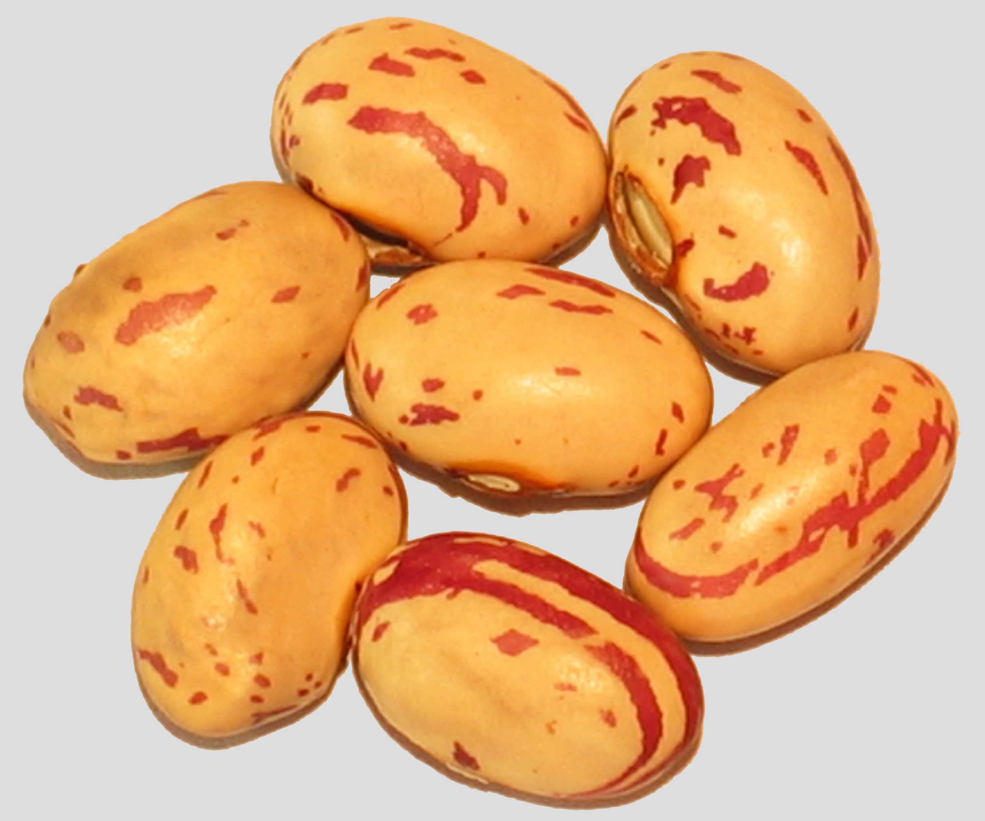 image of Gabarone Sugar beans