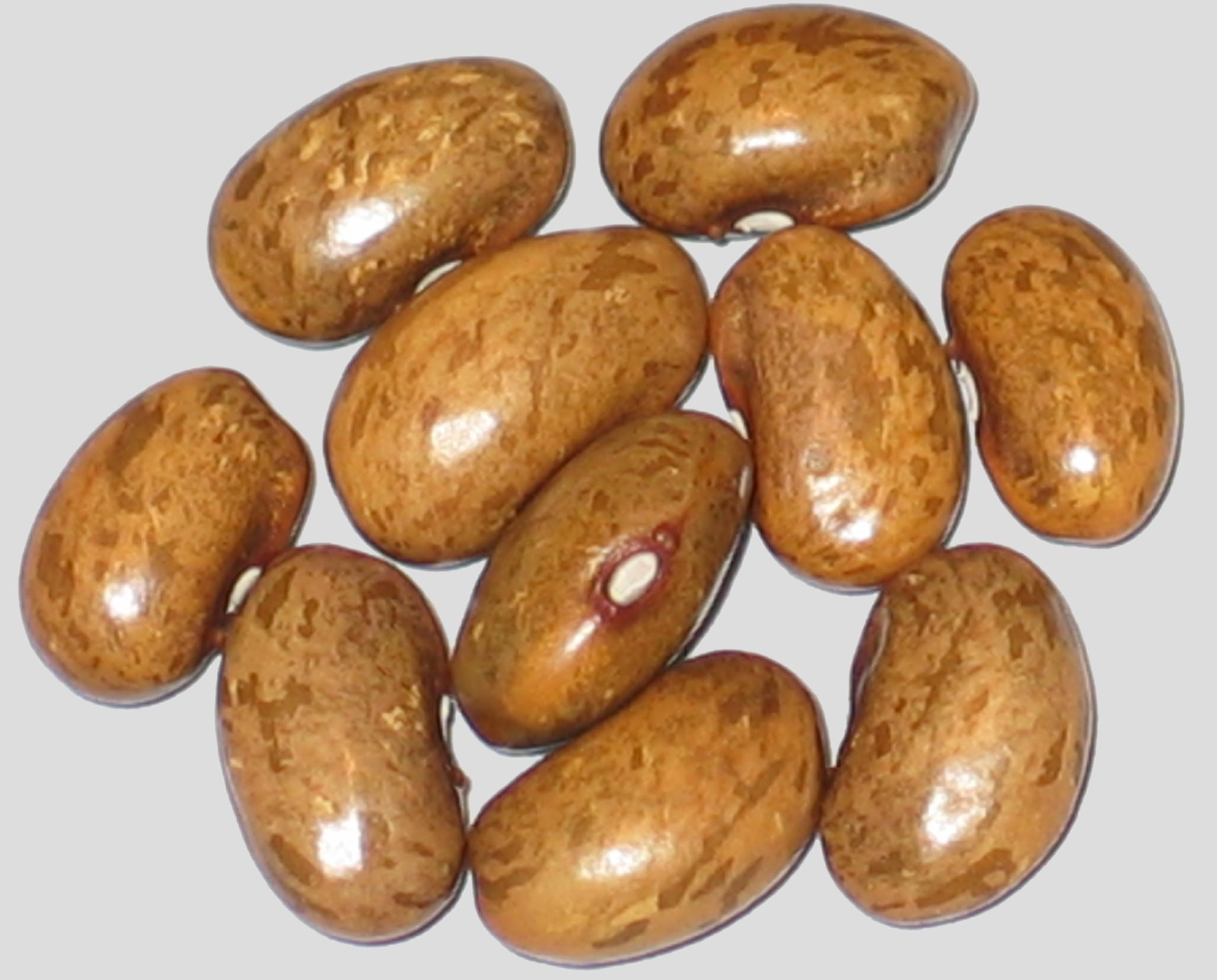 image of Gopher beans