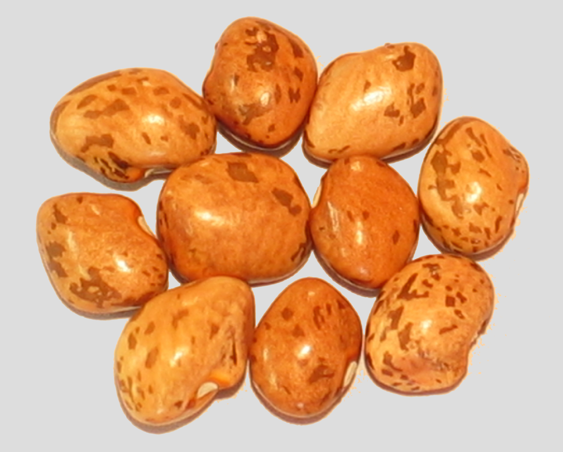 image of Greasy Grits beans
