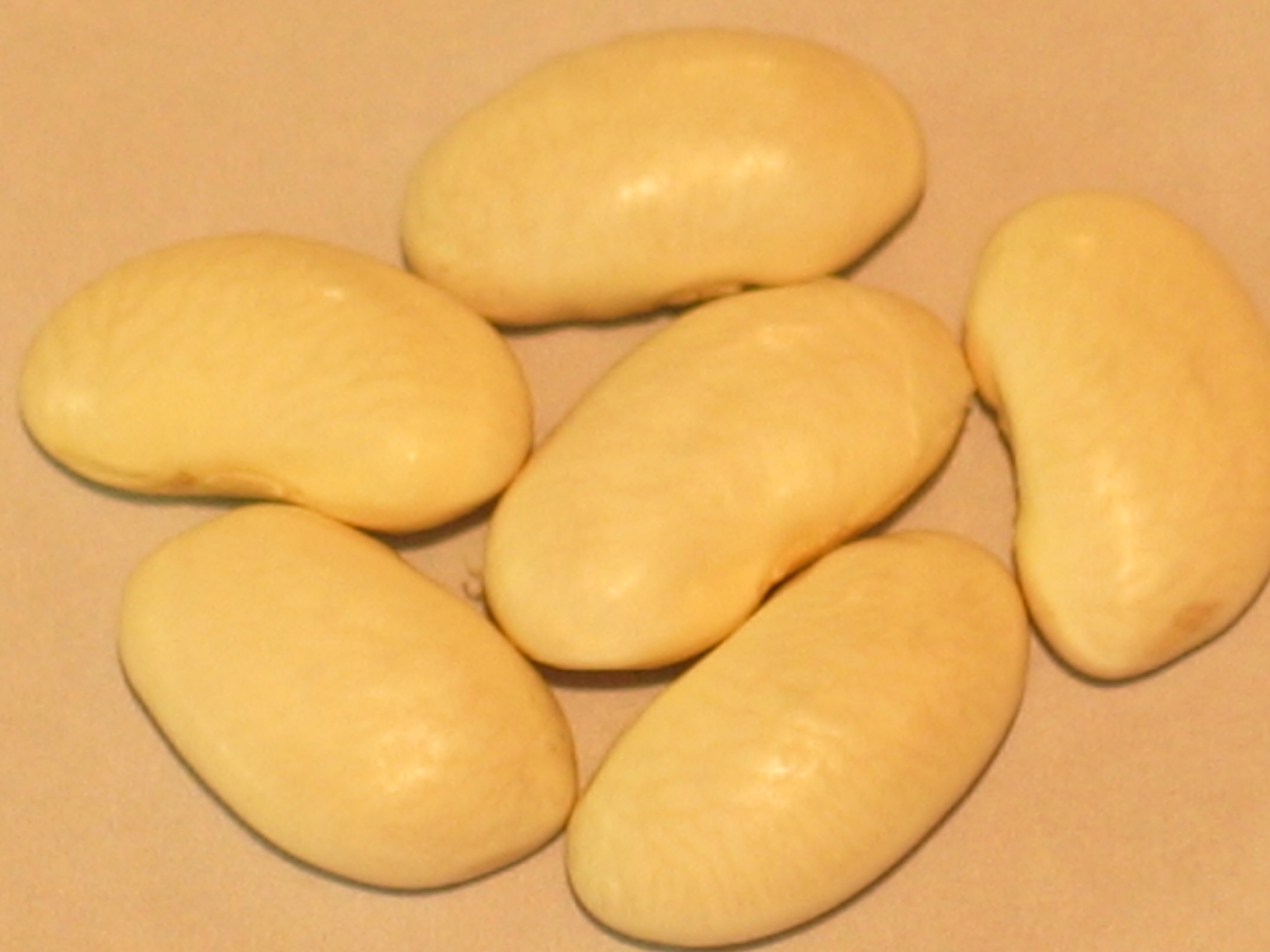 image of Harvey's White Haricot beans