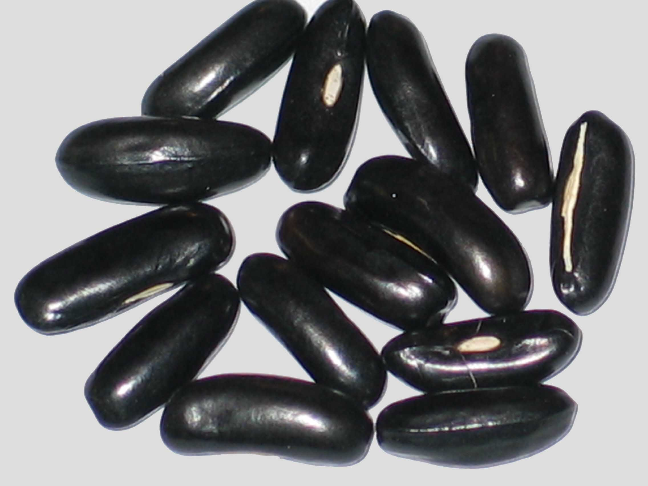 image of Honey Keygold beans