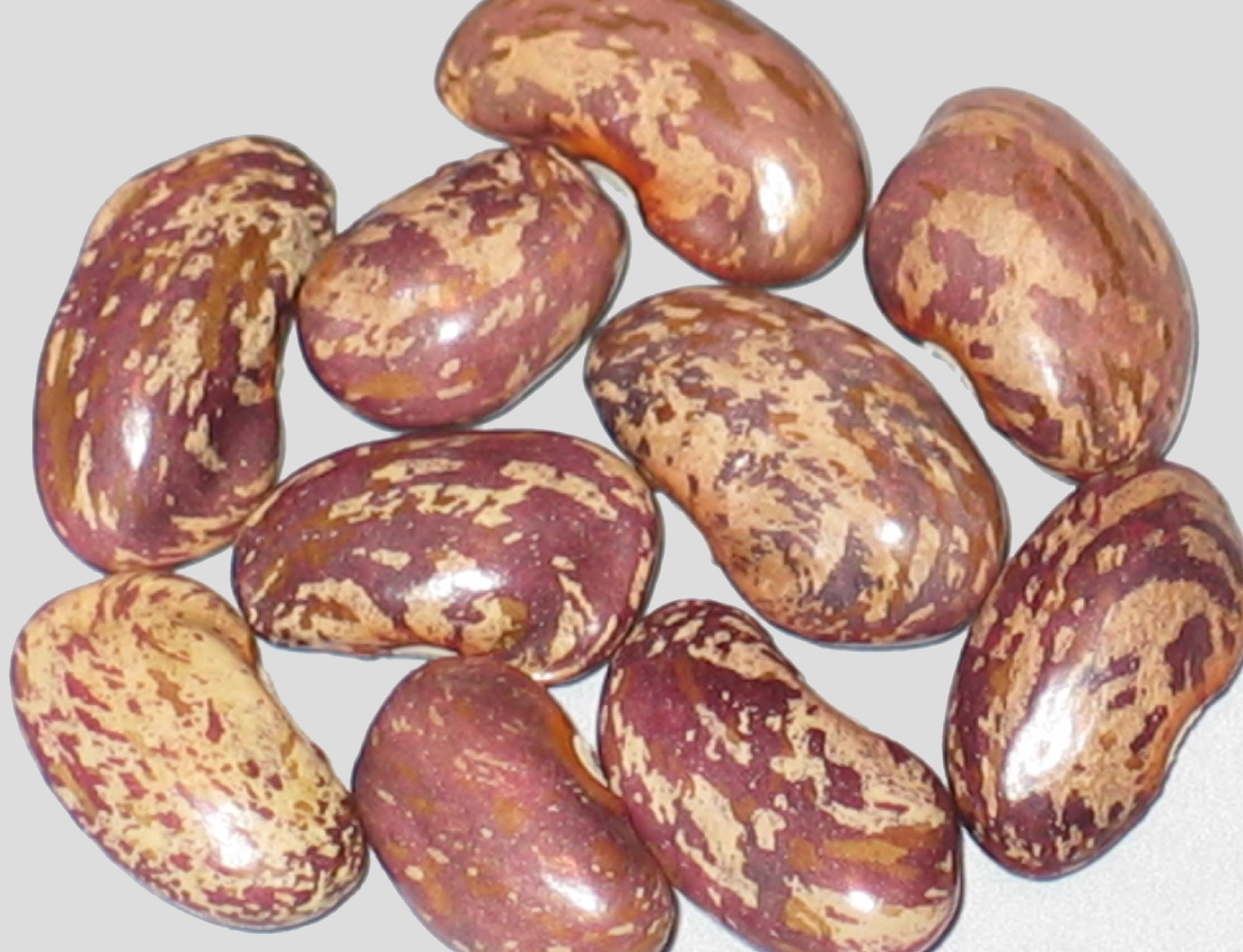 image of Hopper Holler beans