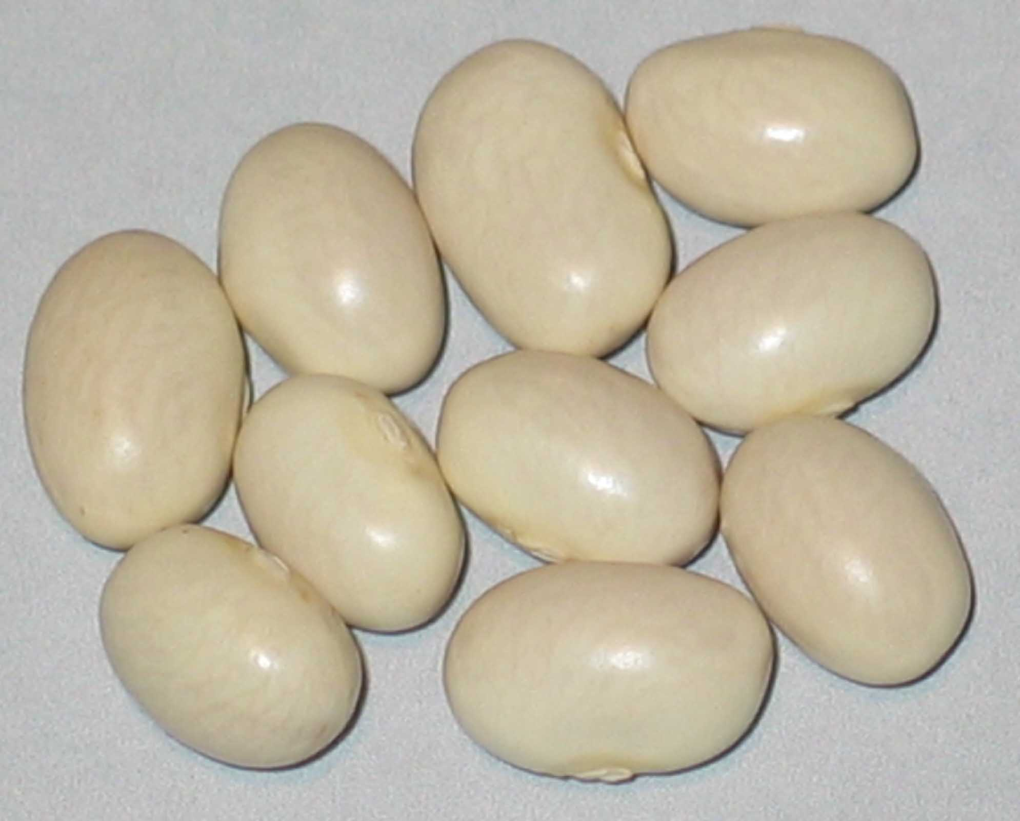 image of Idaho Marrow beans