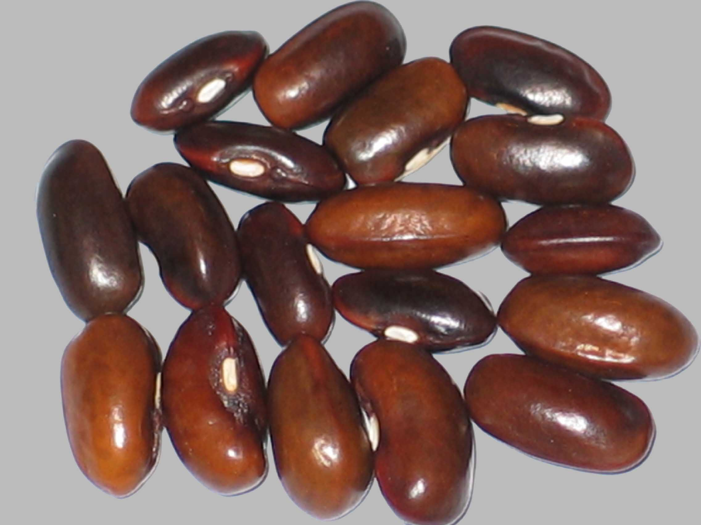 image of Idelight beans