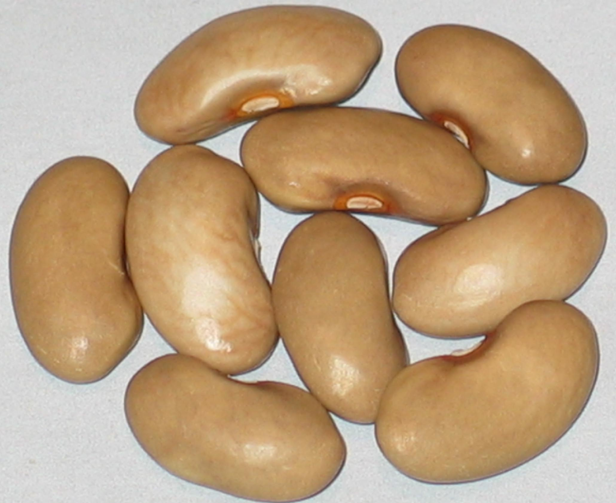 image of Johnsburg beans