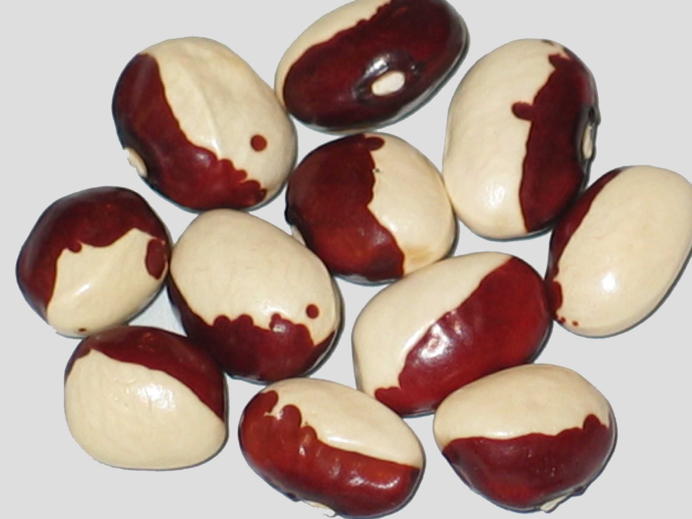 image of Joyce Fetterley's Red & White beans
