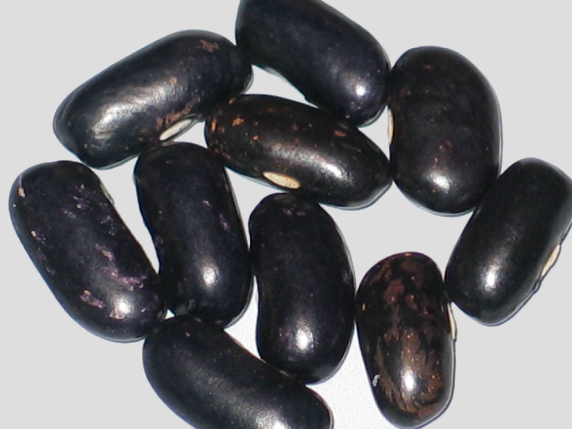 image of King's Knight beans