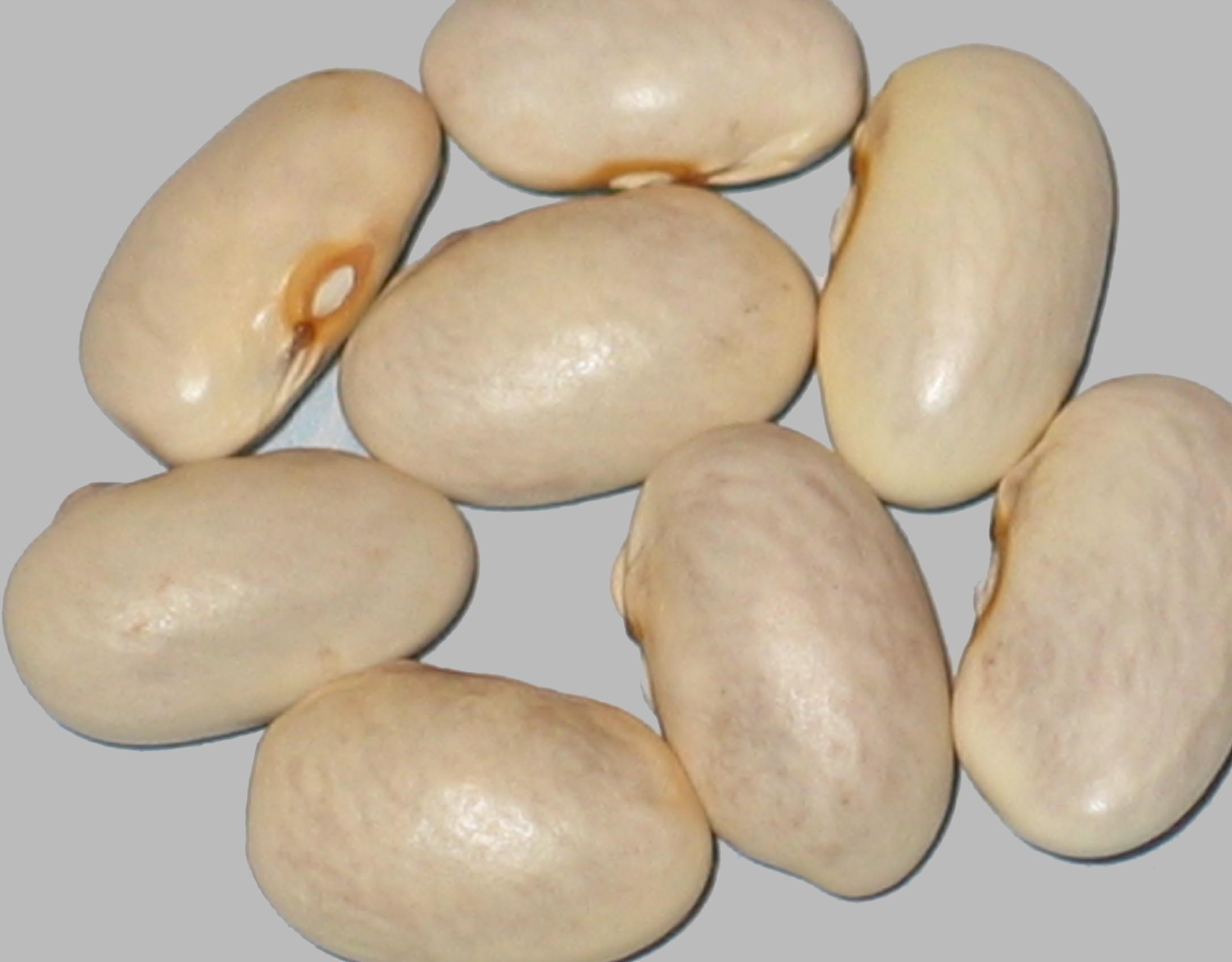 image of Koronis Cream beans
