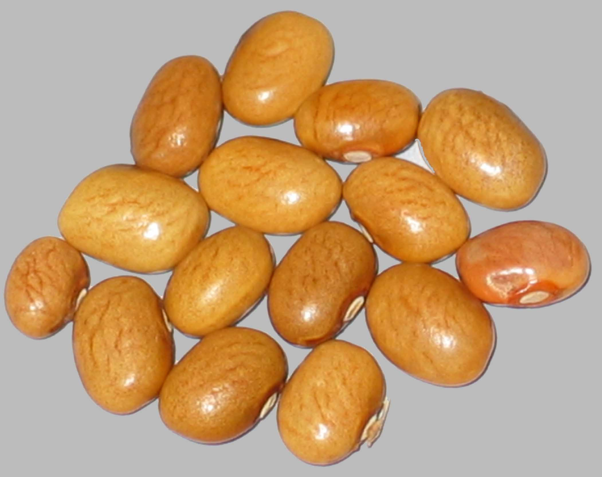 image of Koronis Gold beans
