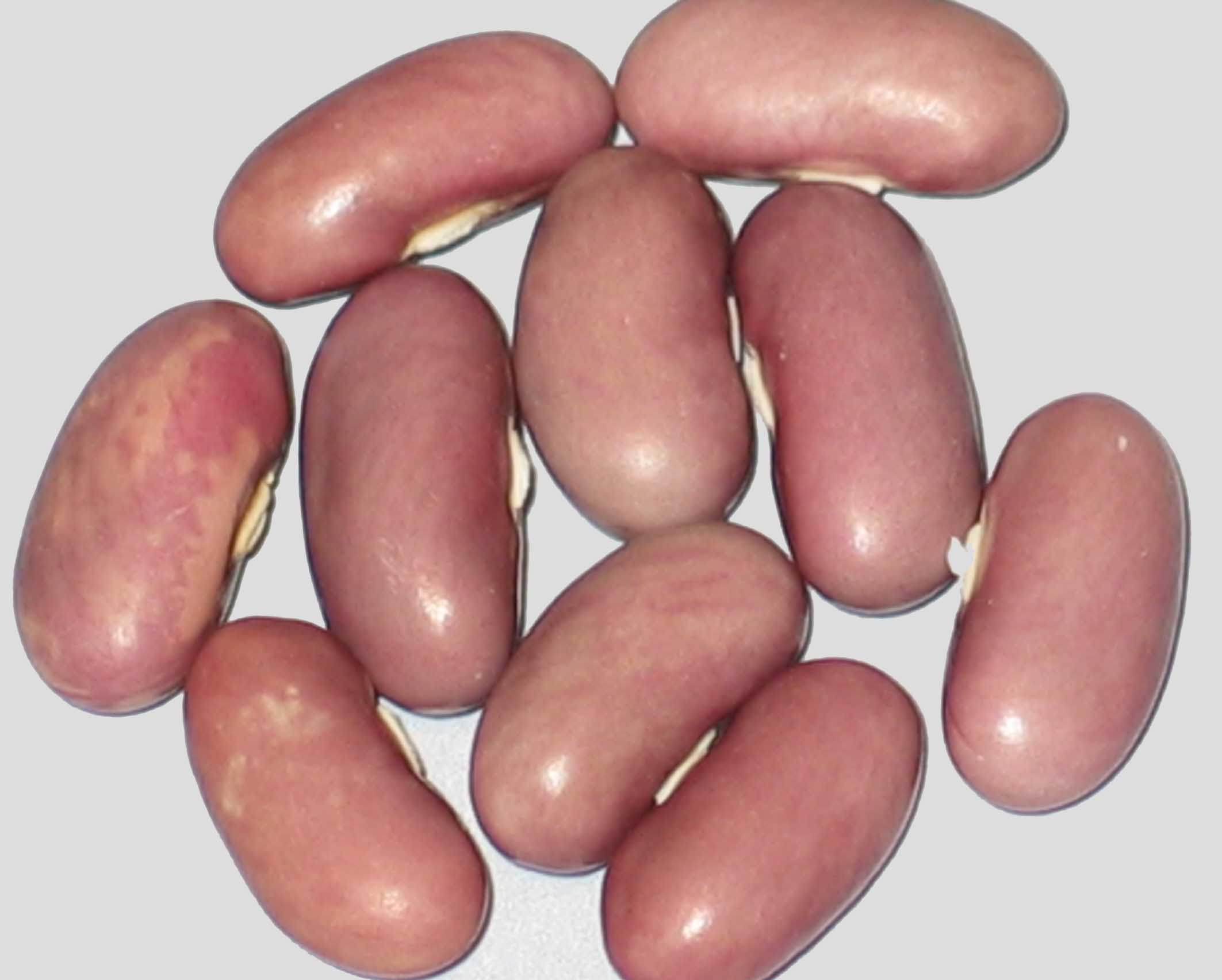 image of Lavender Bush beans