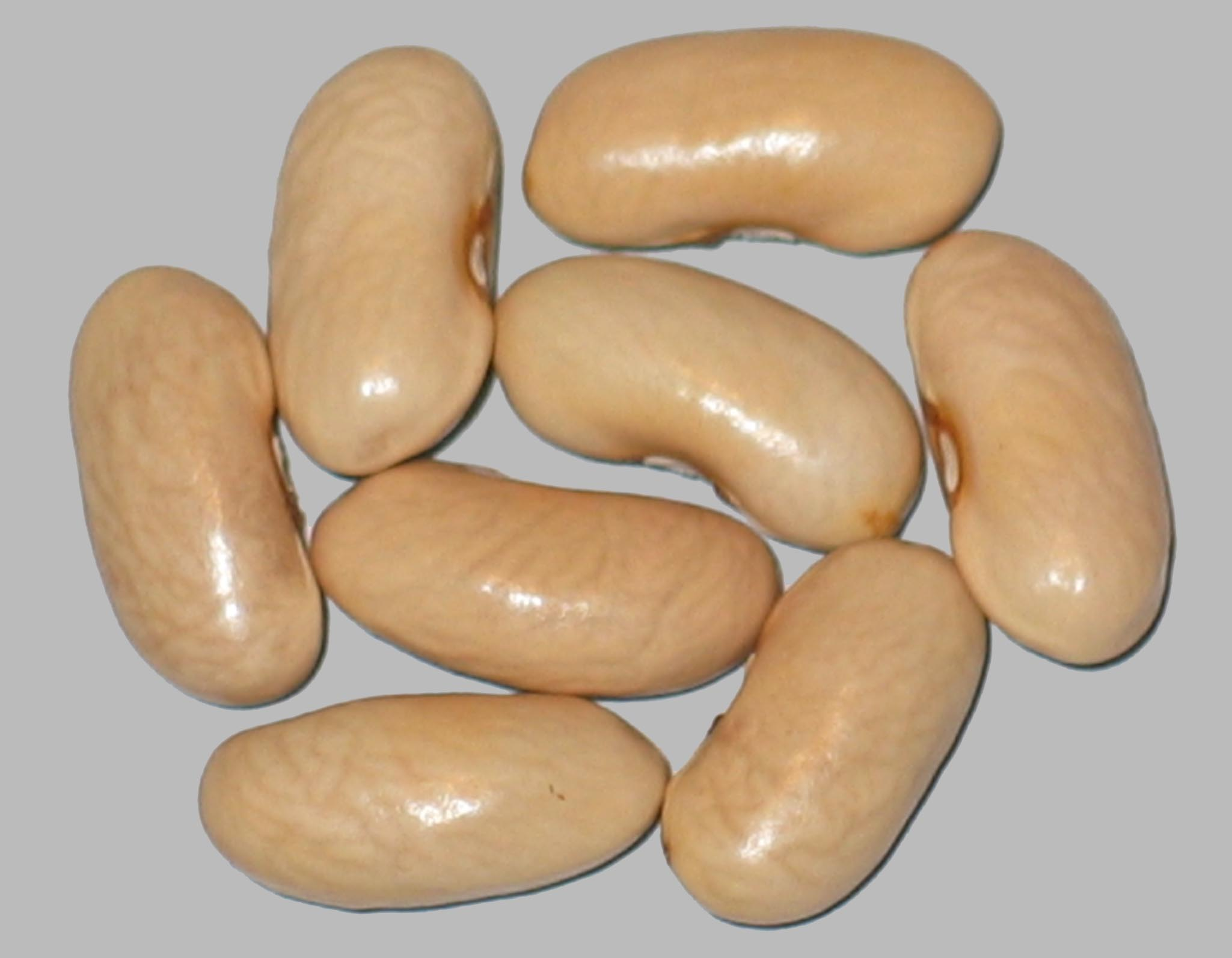 image of Long Lake Giant beans