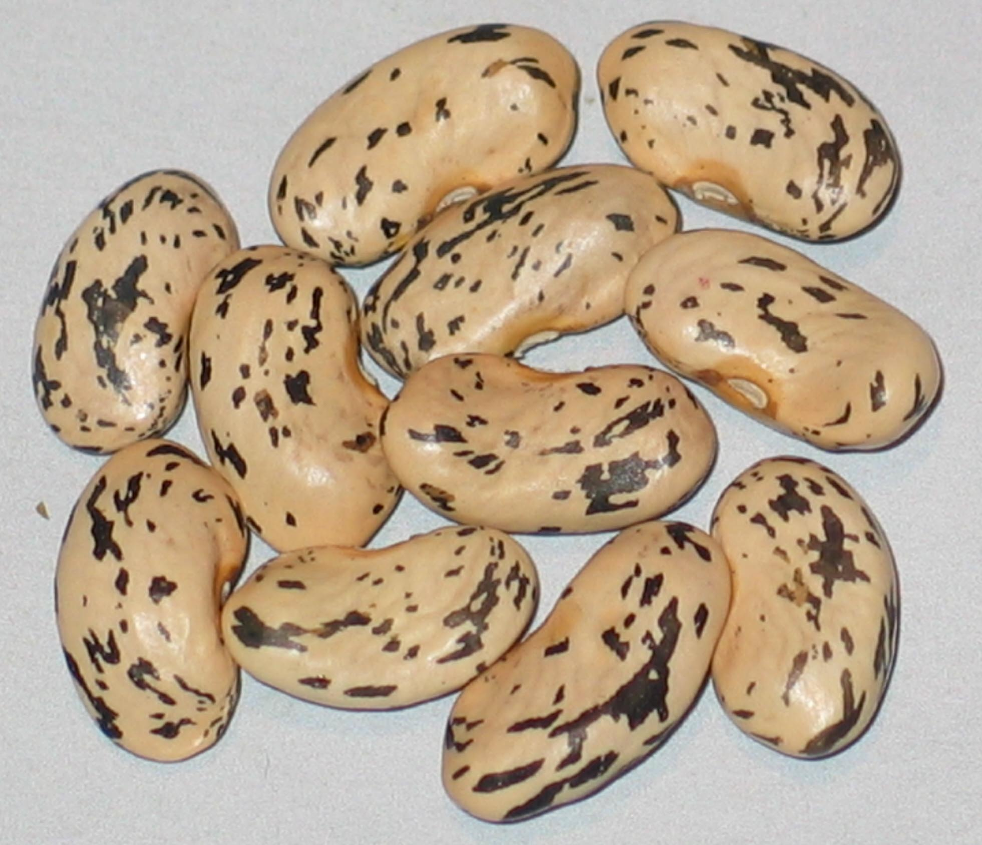 image of Marvel Of Nictaux beans