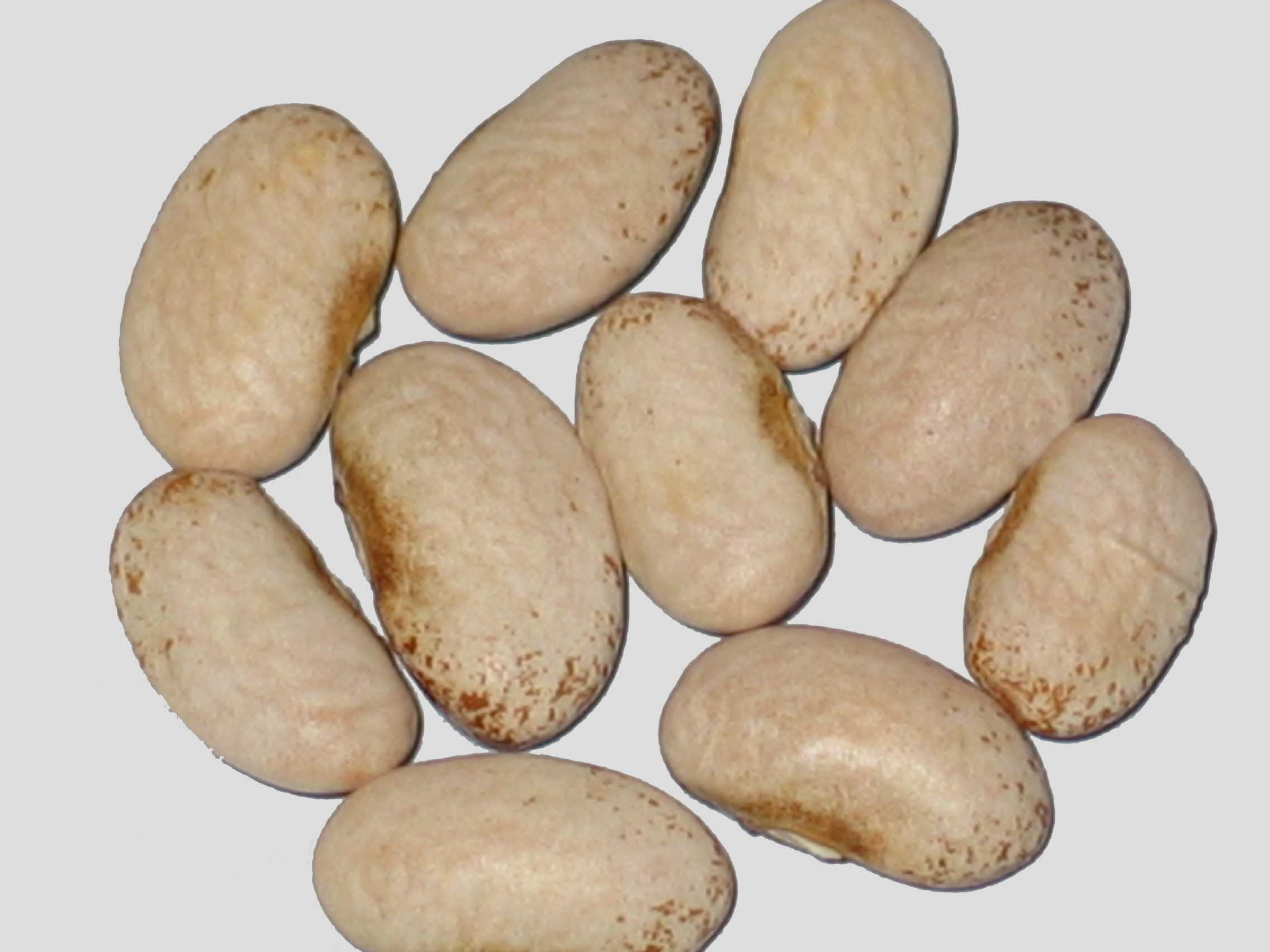 image of Nova Star beans