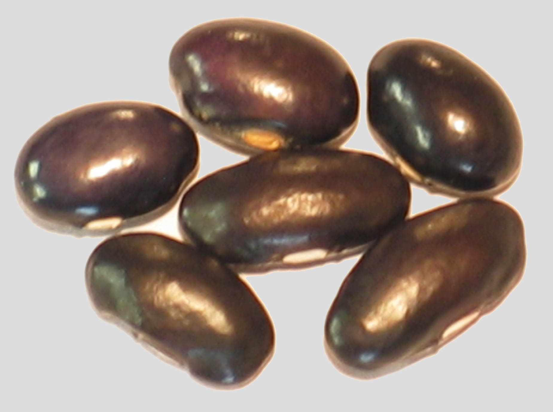 image of Old Black Coco beans