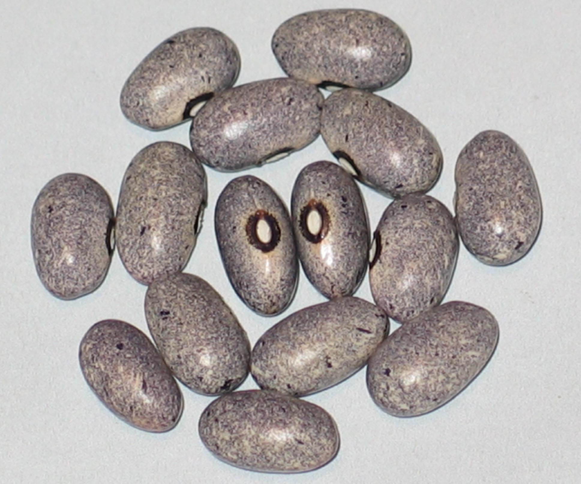 image of Pale Grey Lavender beans
