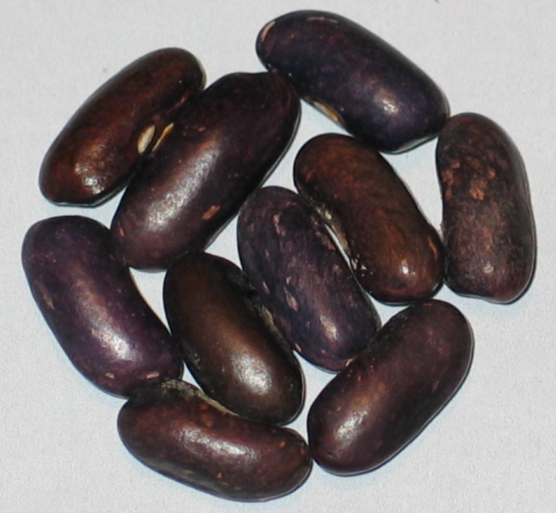 image of Paula Snap beans