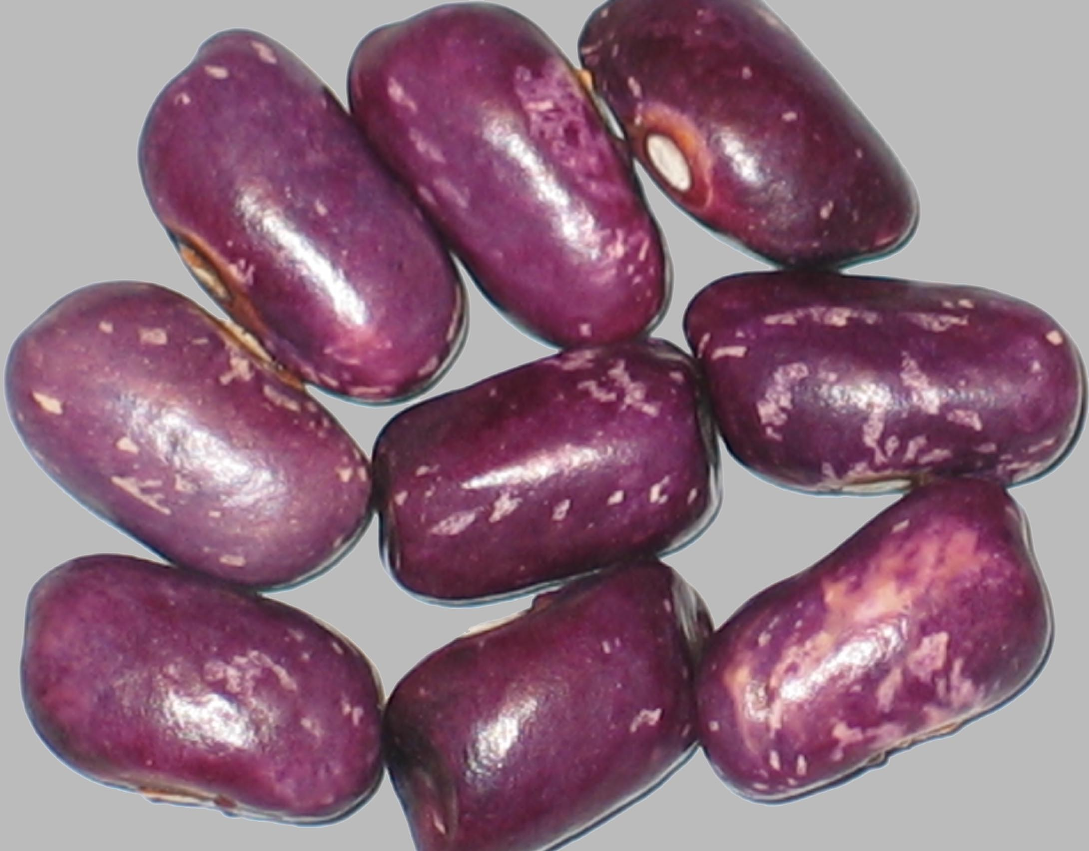 image of Prince Purple beans