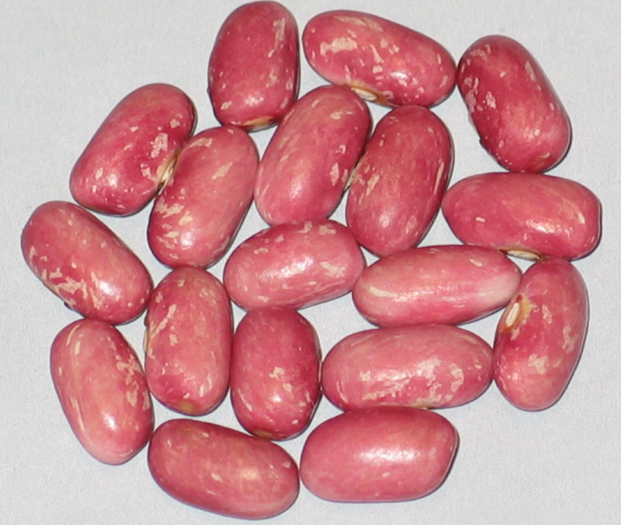 image of Princes Rose beans