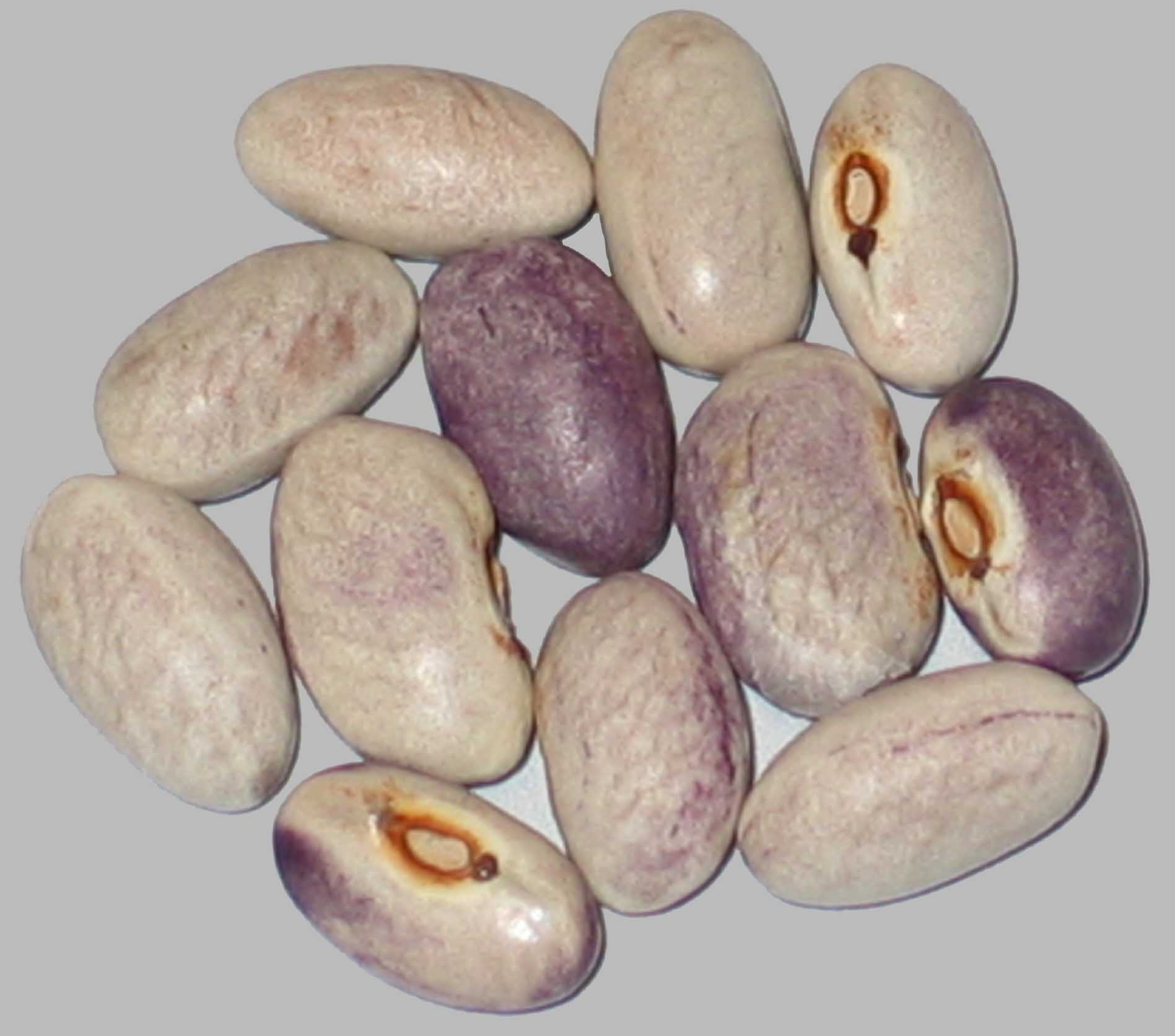 image of Purple Rain beans