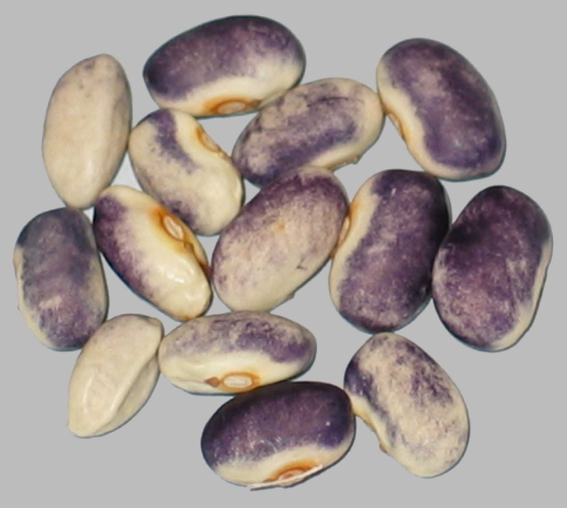 image of Purple Rose beans