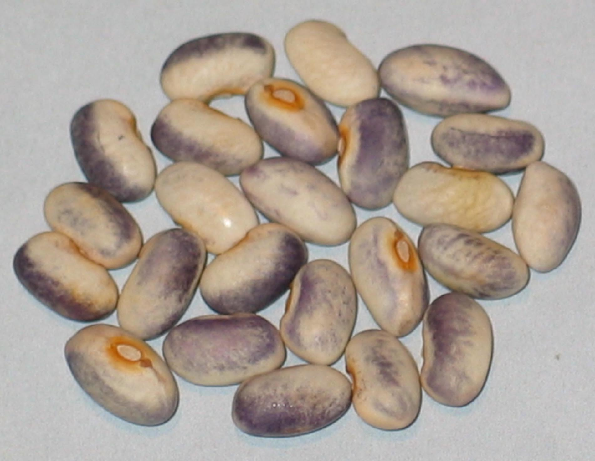 image of Purple Rose Creek beans