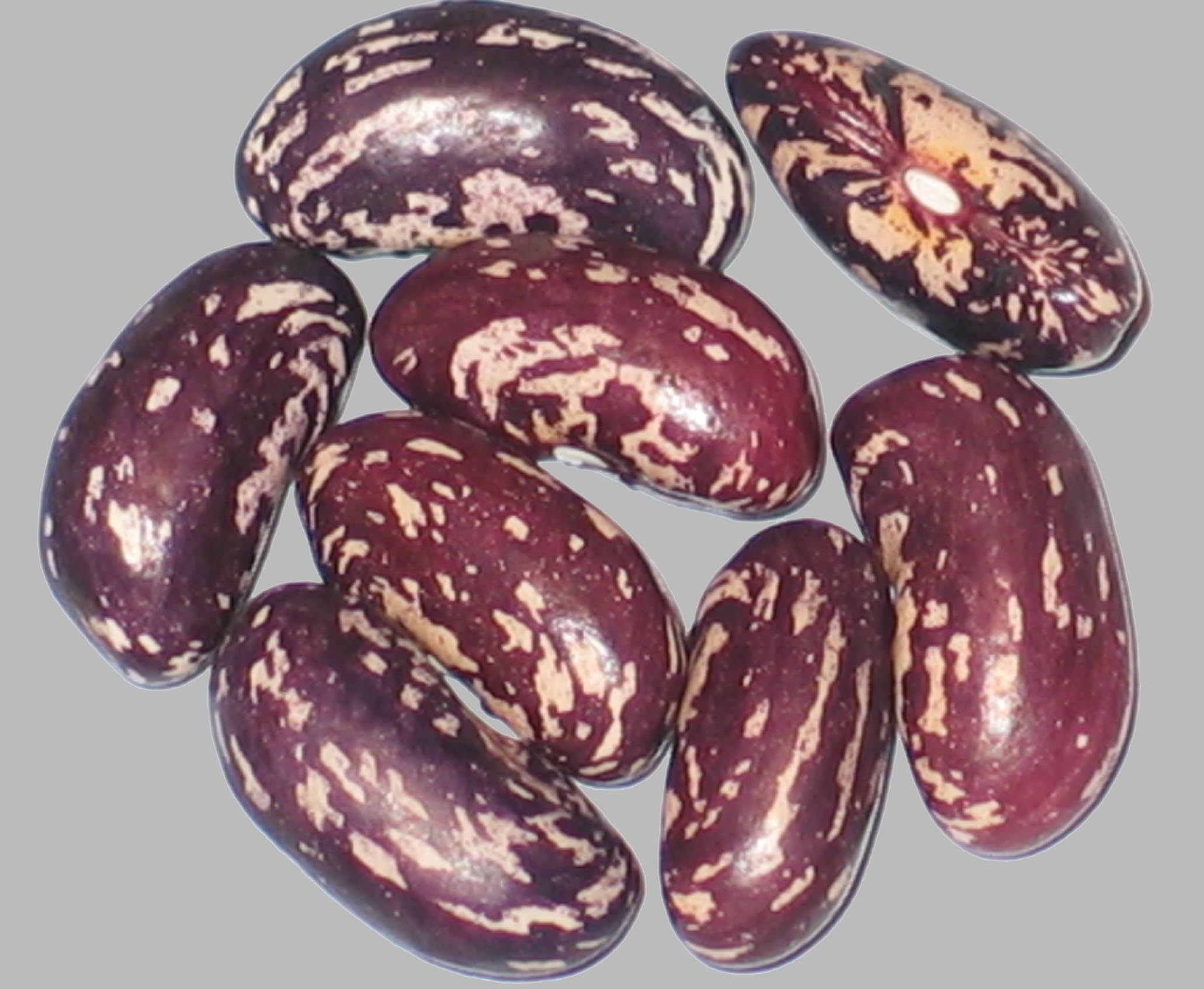 image of Railroad beans