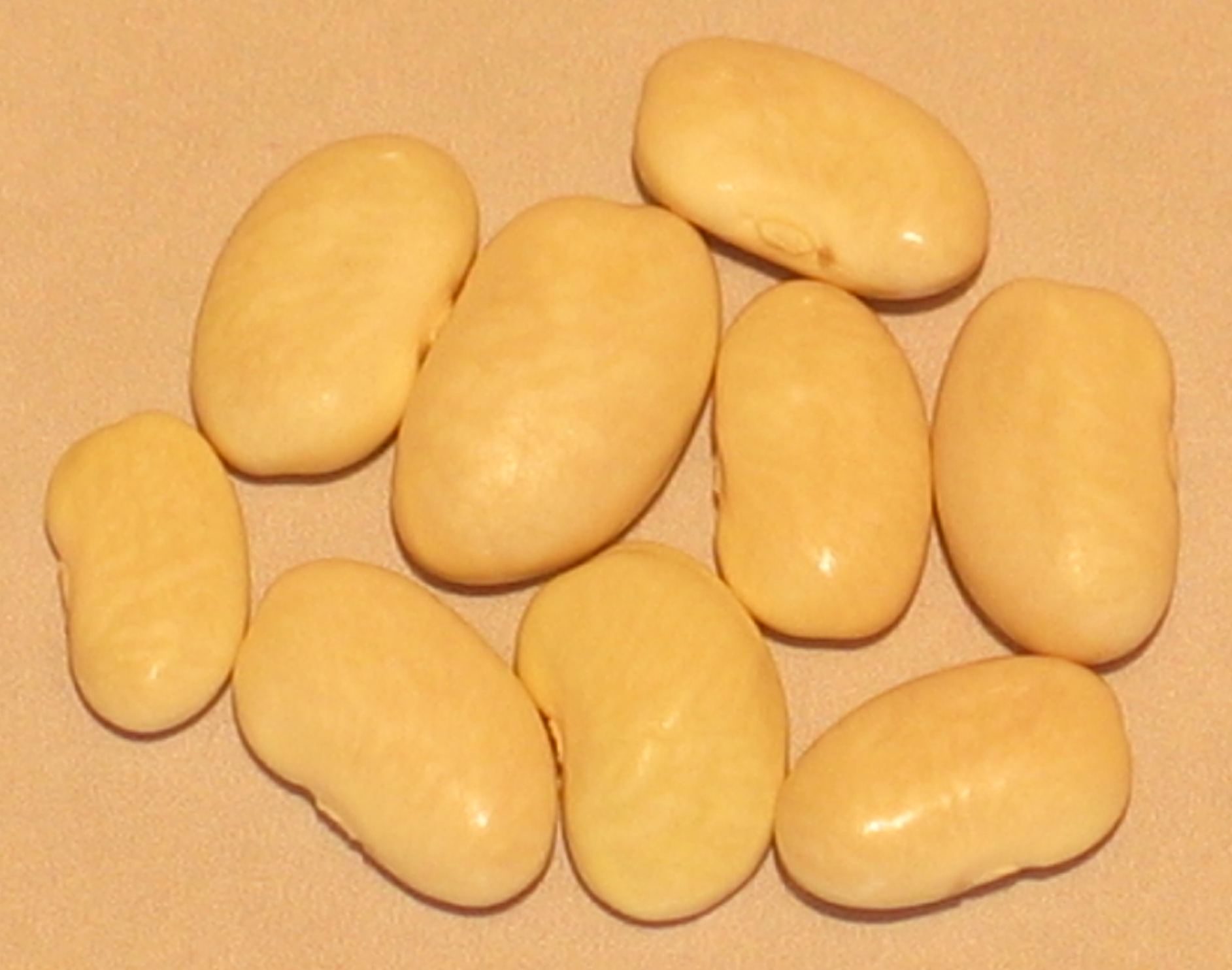 image of Wide Pod White Greasy beans